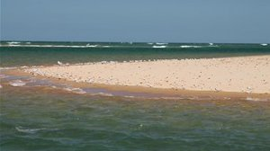 Colony of little terns