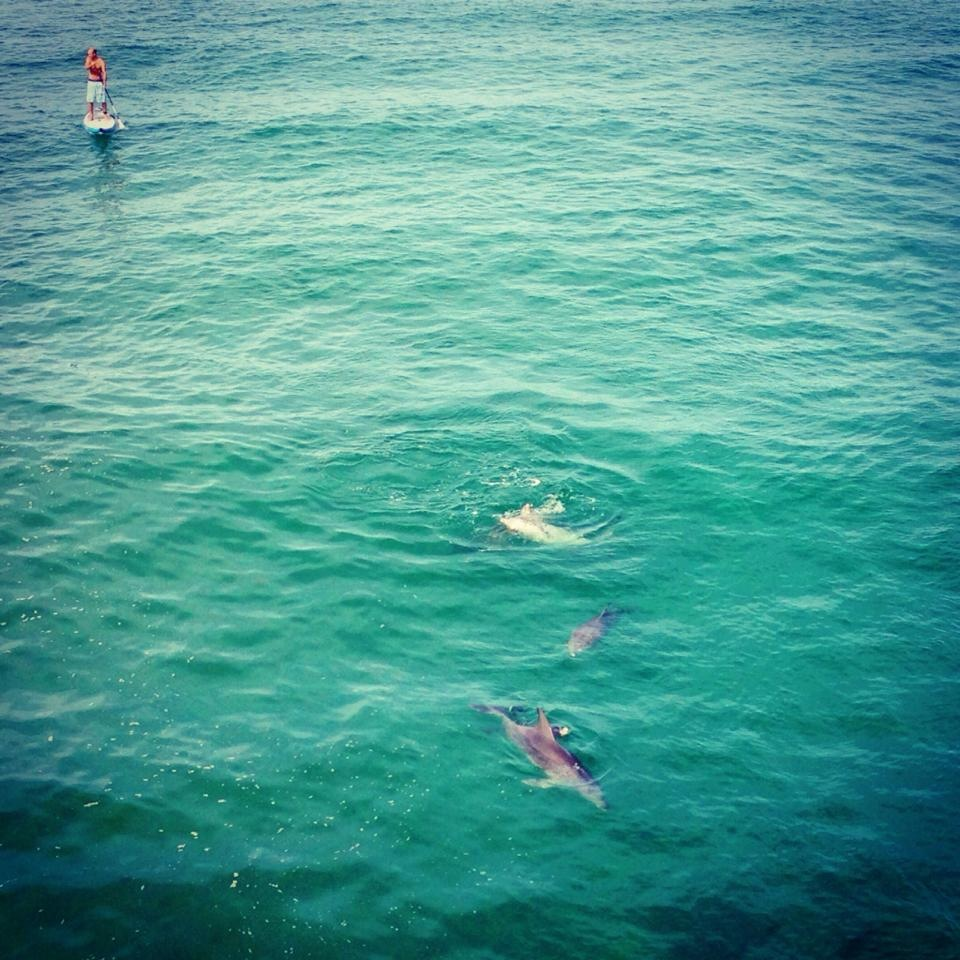 Stand up paddleboarding with dolphins in Ballina