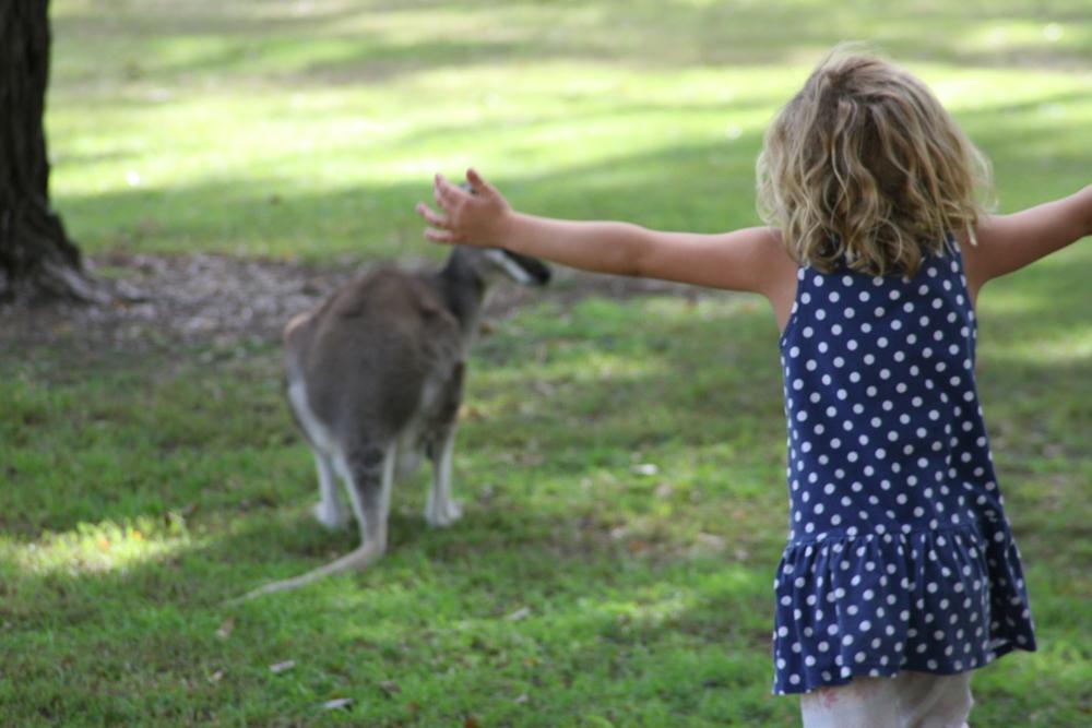 Kangaroo BIG4 Cania Gorge