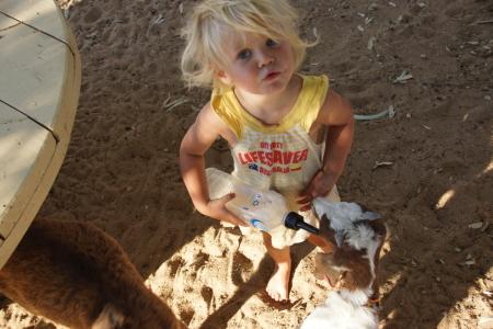 Feeding a goat in North Queensland