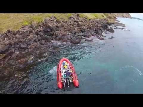 Cape Bridgewater Seals